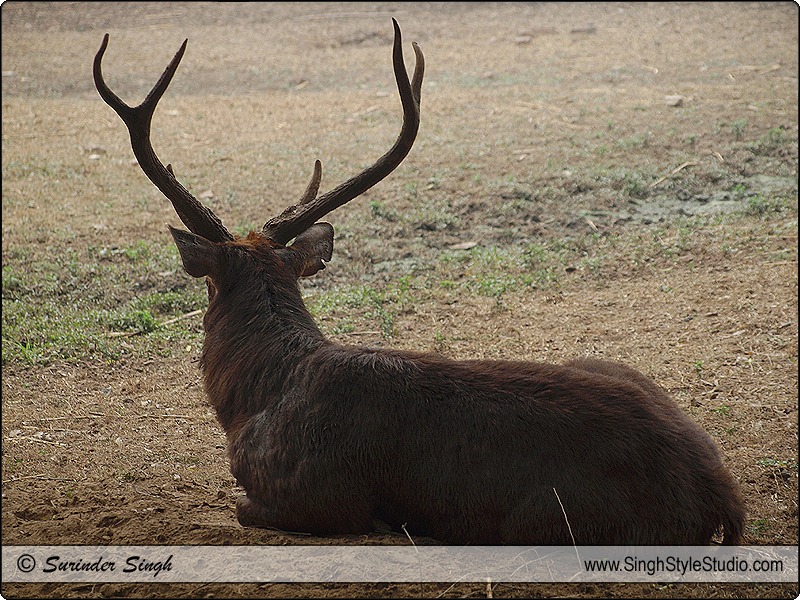 Indian Wildlife Photographer in Delhi India
