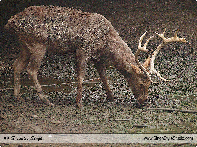 Indian Wildlife Photography by Wildlife Photographer in Delhi India
