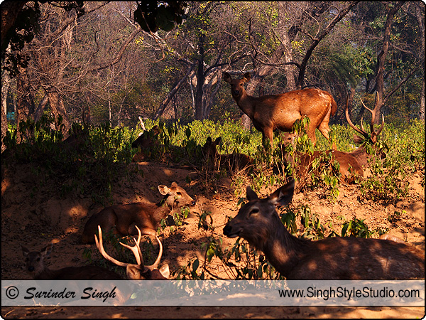 Wildlife Photography, India, Wildlife Photographer