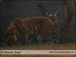 Wildlife Photographer in India