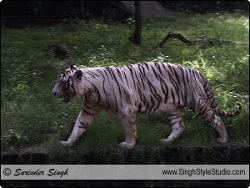 Wildlife Photographer India